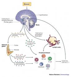 male hormone suppression drugs